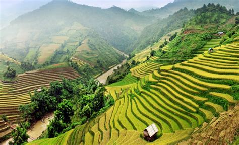 5 Strange and Beautiful Rice Terraces