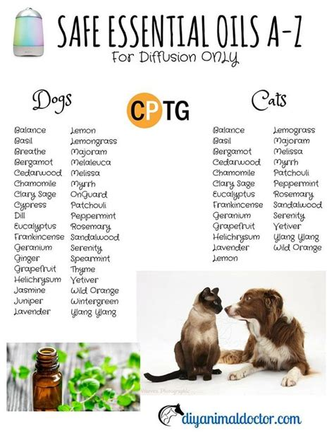 essential oils for dogs 17 best ideas about essential oils dogs on cookies for dogs essential