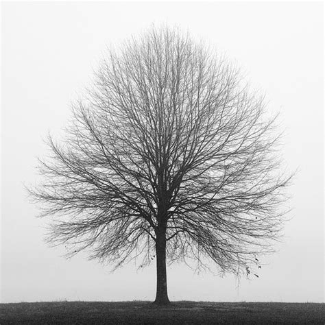 25 best ideas about black and white tree on pinterest