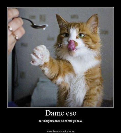 imagenes chistosas gatos fotos graciosas de gatos
