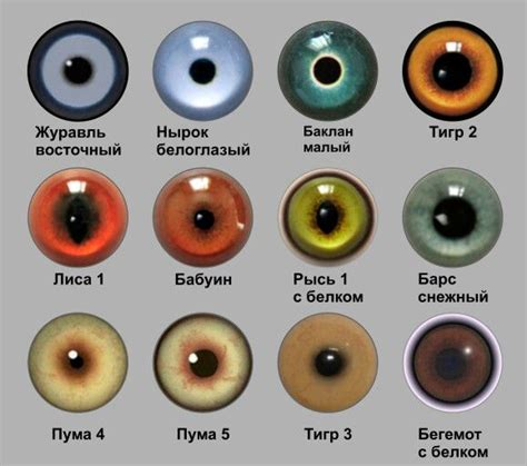 printable doll eyes 145 best eyes images on pinterest eye drawings drawing
