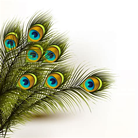 peacock feathers background vector premium download