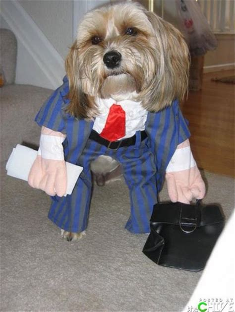 puppies dressed up dogs dressed up 14 dump a day