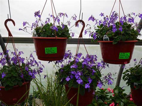 Garden Of Ephrata Pa Zimmerman S Greenhouse Of Ephrata 421 Brossman Rd