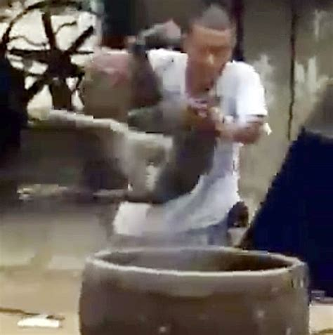 boiling dogs in defenceless dogs scream in agony as they are boiled alive for sick trade in