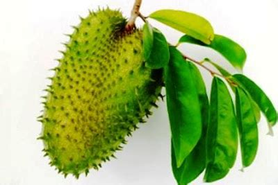 Menghambat Sel Kanker Liver Sakit Hati Anti Inflamasi Kunir Putih obat alami kanker serviks walatra berry jus berkhasiat