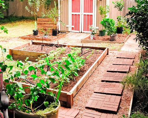 backyard gardening tips vegetable garden designs and ideas