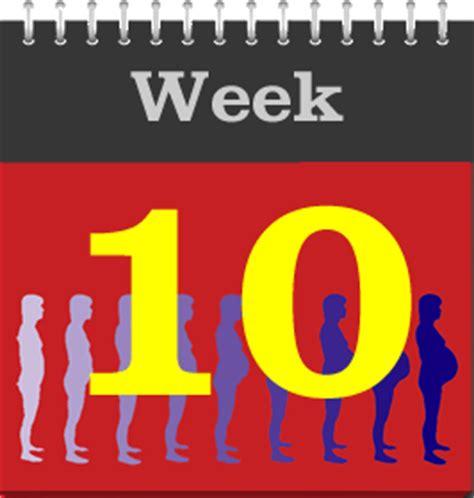 10th february week pregnancy weeks by week pregnancy 10th week