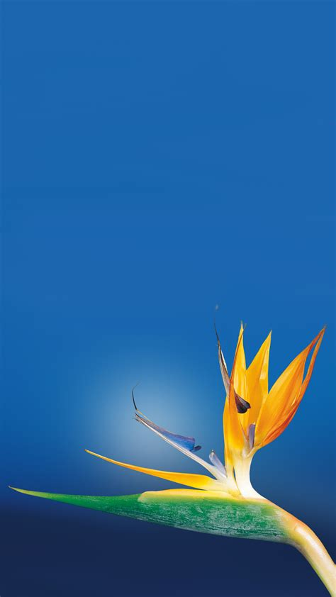 wallpaper flower untuk android bird of paradise flower android wallpaper free download