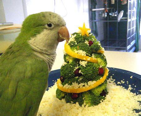 diy broccoli bird christmas tree petdiys com
