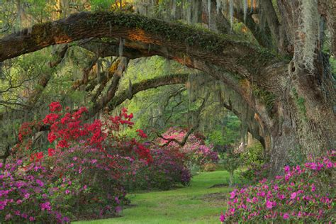 pictures of garden romantic style gardens at magnolia plantation and gardens