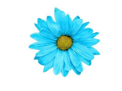 Blue Flowers by Blue Flower Picture Savingourboys Info
