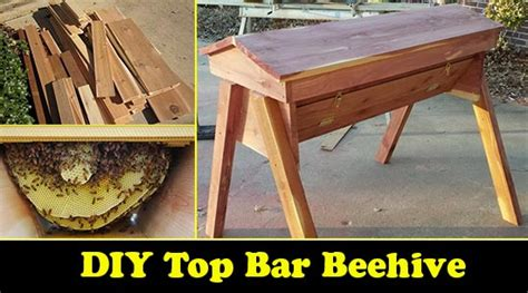 how to build a top bar bee hive build your own diy top bar beehive