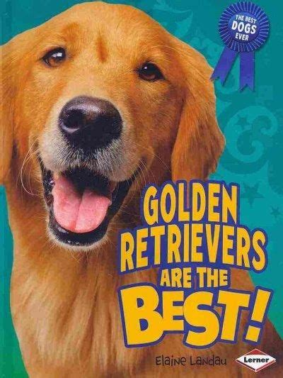 how to care for golden retriever 1000 ideas about golden retrievers on golden retriever puppies retriever