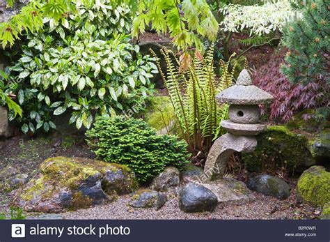 Fern Rock Garden Apartments Rock Garden With Fern Japanese Lantern Shrubs And Trees Design By Stock Photo Royalty Free