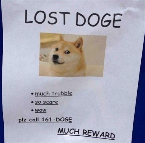 How To Make Doge Meme - lost doge d o g e pinterest lost and doge
