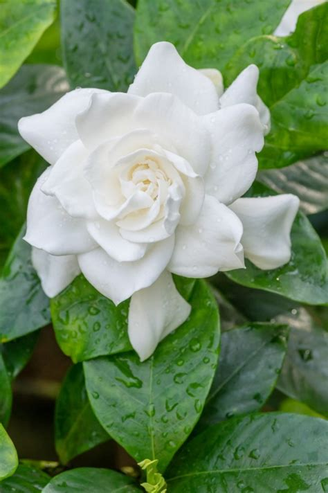 fragrant flowers for garden grow these 10 fragrant flowers for a heavenly smelling