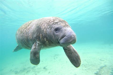 Endangered Sea Creatures That We are Not at All Aware Of
