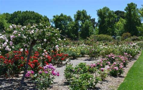 Adelaide Botanic Garden Adelaide International Garden In Picture Of Adelaide Botanic Garden Adelaide