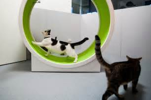 Cat wheel cat exercise wheel pet from the cat wheel things