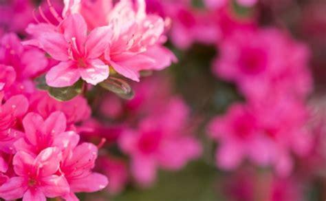 fiori primaverili da balcone fiori primaverili da balcone leitv
