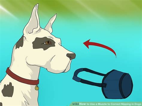 how to muzzle a how to use a muzzle to correct nipping in dogs 13 steps