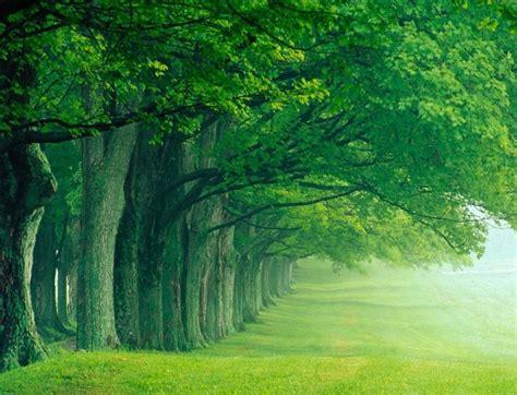 contoh wallpaper alam gambar alam hijau download gratis