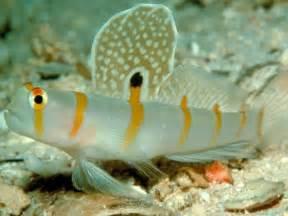 Download Aquarium Fish Free Wallpaper In Pet Category Freshwater Fish