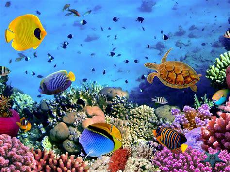 fish corals turtle beautiful underwater wallpaper hd