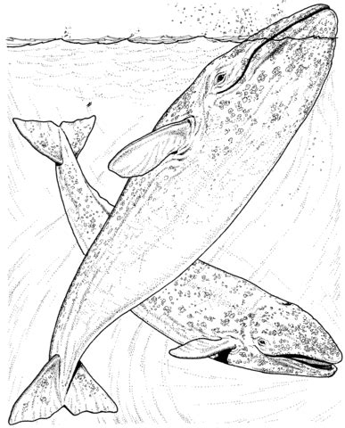 gray s anatomy coloring book free grey whales coloring page free printable coloring pages