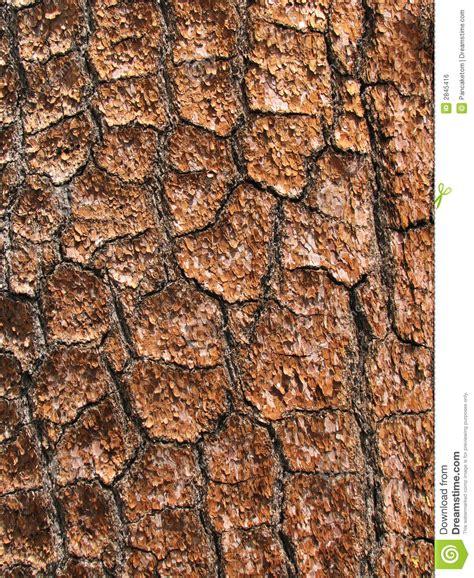 pine bark detail royalty free stock image image 2845416
