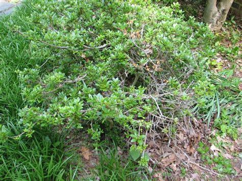 landscaping basics pruning r u l y