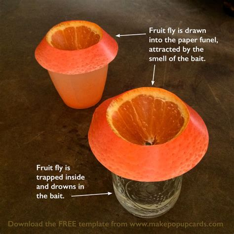 How To Make Paper Look With Vinegar - diy cheap efficient easy fruit fly trap