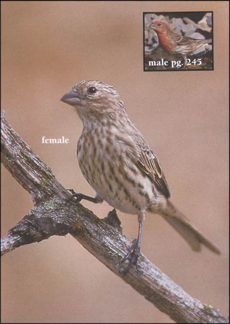 type of hawks in tn birds of tennessee field guide 031980 details rainbow resource center inc