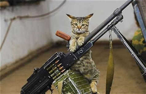 Funny Cats With Machine Guns Pictures   My Quotes Images