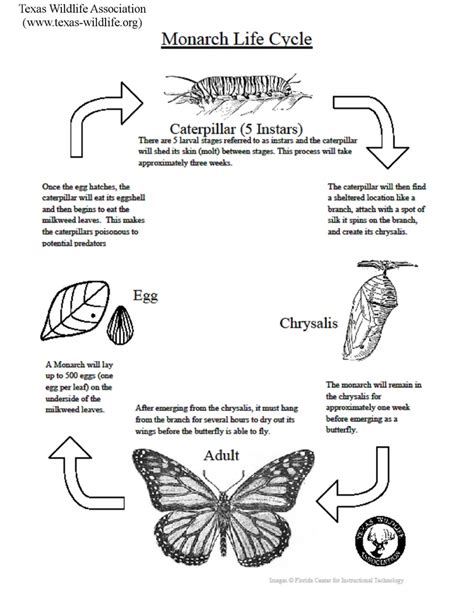emotional butterfly the metamorphosis and the lessons learned books monarch butterfly cycle lesson wildlife