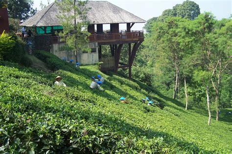 menikmati kesegaran alam  kebun teh wonosari malang