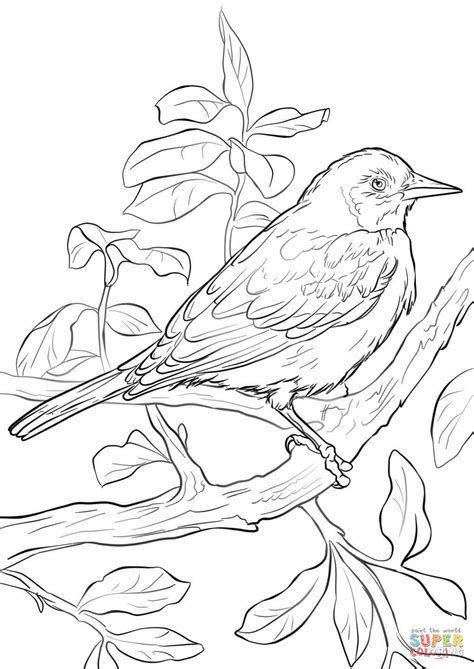 baltimore oriole coloring page free printable coloring pages