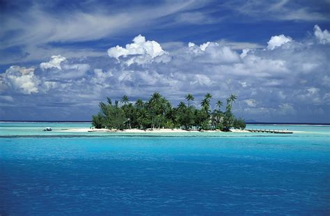 with palm tree island small palm tree covered tropical island photograph by