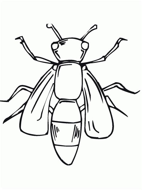 coloring pages with bugs free printable bug coloring pages for kids