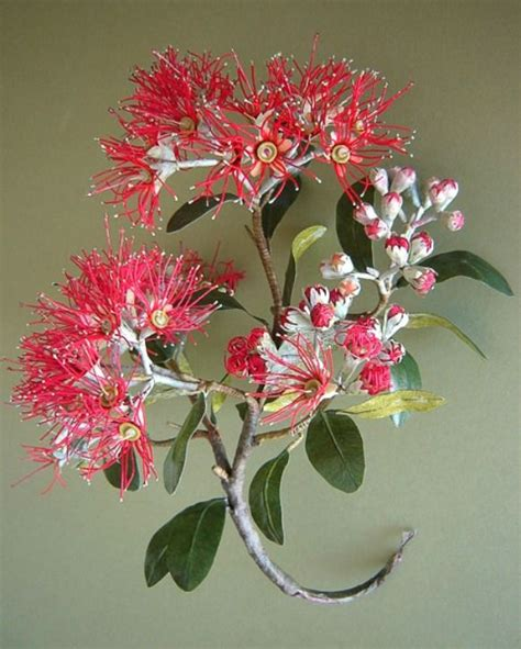 Sulap Five In One Flower pohutukawa jpg 582 215 726 flor papel paper flower diy crepe paper flowers crepe
