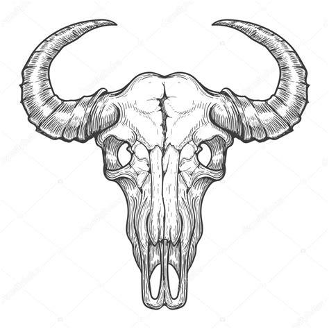 desenho de cr 226 nio de b 250 falo vetores de stock