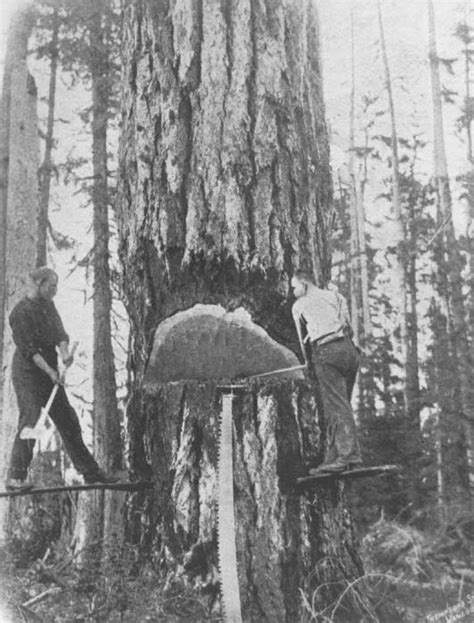 Logging - Felling - Axes - Forest History Society
