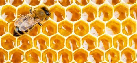 candele di cera d api cera d api propriet 224