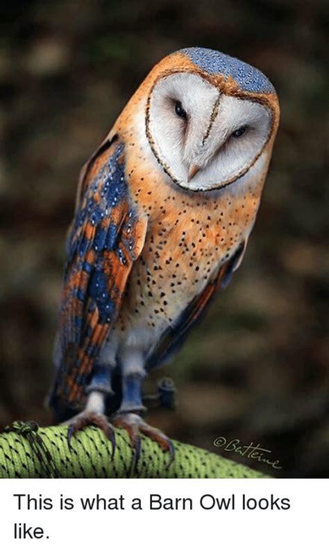25 best memes about barn owl barn owl memes