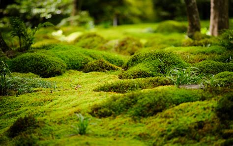 Moss And Gardens by Moss Garden A Magical Backyard