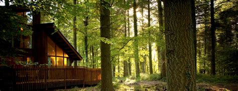forest of dean log cabin lodge holidays 2014 2015