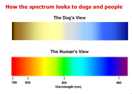 how dogs see color one for the road can dogs see colors
