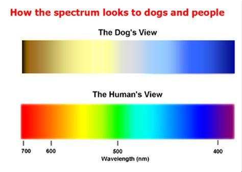 how do dogs see color one for the road can dogs see colors