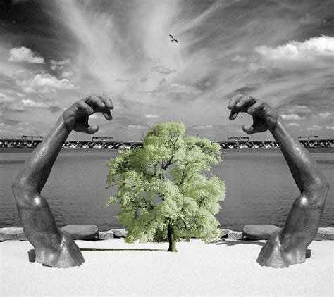 environmentally friendly trees 15 easy ways to become environmentally friendly conserve energy future